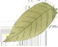 Leaf header